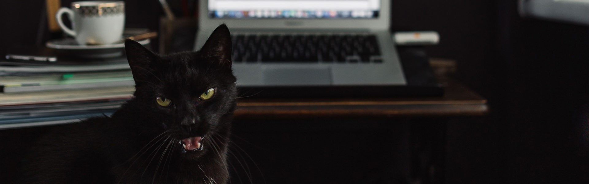 black cat and computer